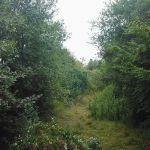 landschaftspflege_01